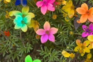 flores-20