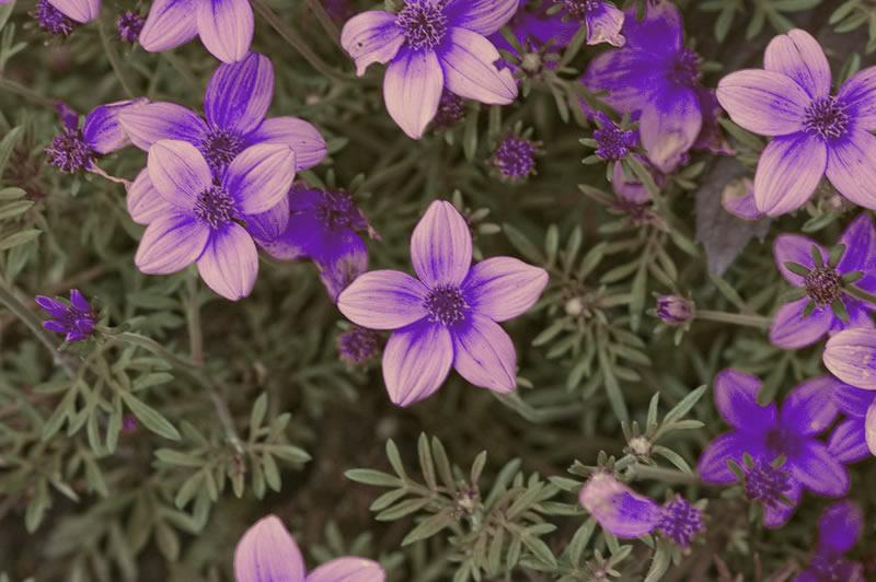 flores-12