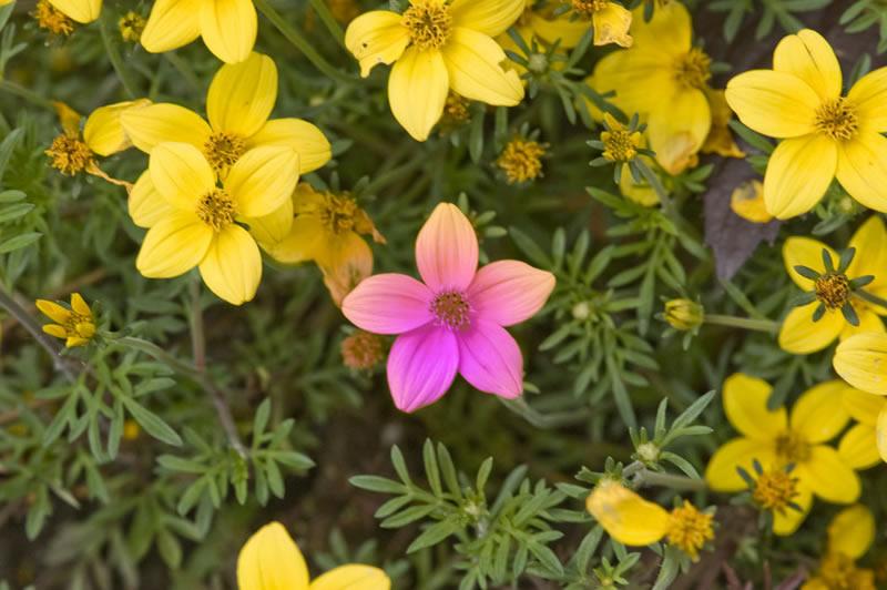 flores-13