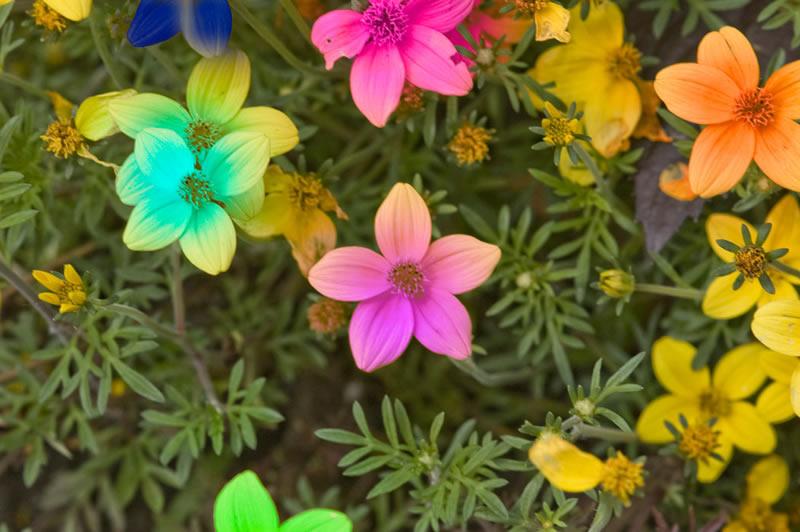 flores-18