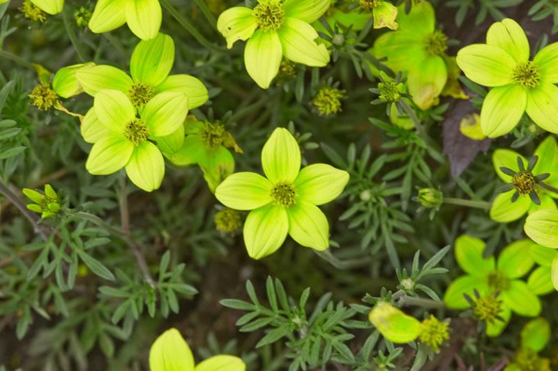 flores-5