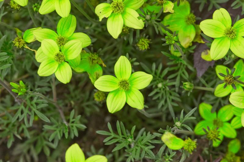 flores-6