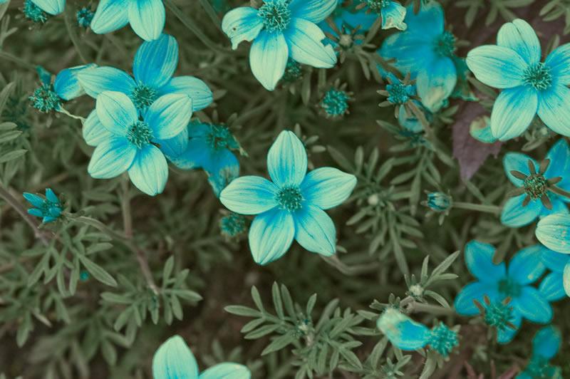 flores-9