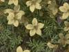flores-11-des-saturada