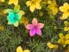 flores-14