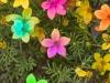 flores-17