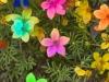 flores-19
