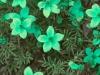 flores-8